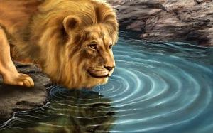 Hermoso león bebiendo agua en el río (wallpaper) - Lion drinking water